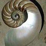 LogarithmicSpiral
