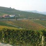 Vigne-Barolo